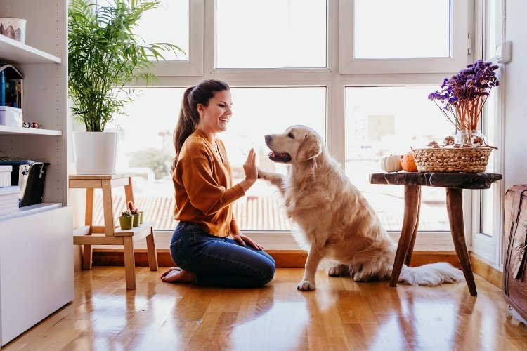 What Rental Property Owners Need to Know About Pet Addendums