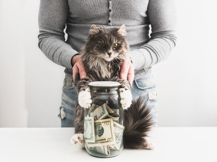 The Difference Between a Pet Deposit, Pet Fee, and Pet Rent